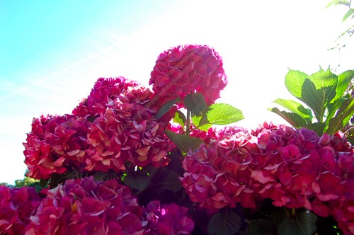 pretty auckland flowers