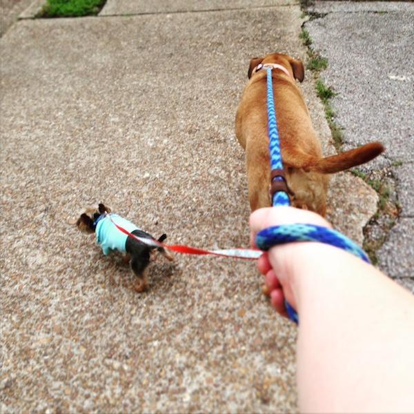 juju walk with sam