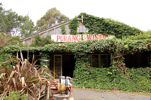 purangi winery in new zealand