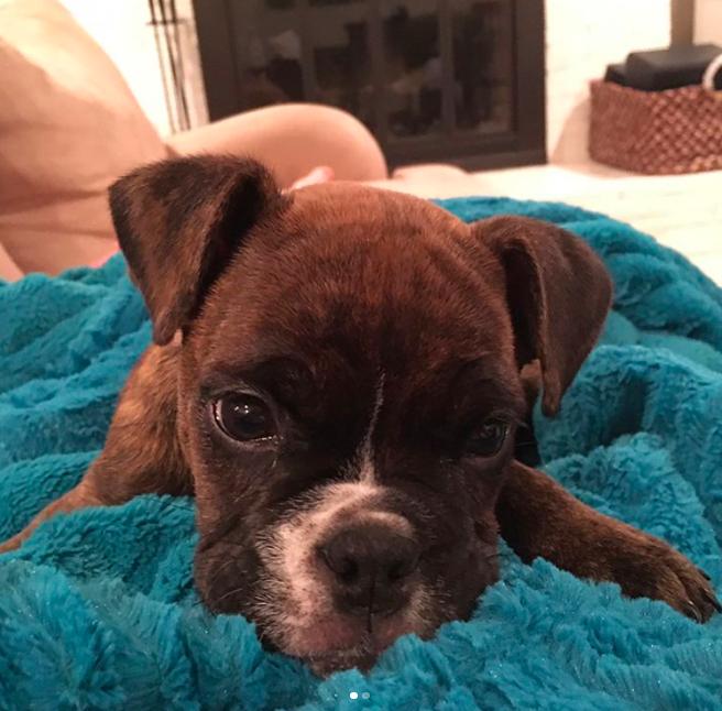 little puppy valley bulldog